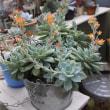 ファンクイーンの花畑*