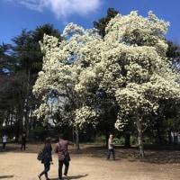 春よ来い、、、