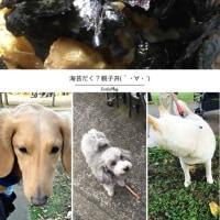 ちちゃっと海苔だく?親子丼(`・∀・´)