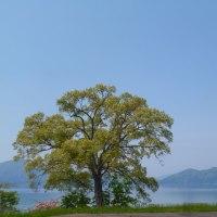 わんちゃんと一緒に田沢湖でランチ♪