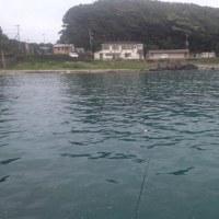 磯釣遊会 4月度一人例会 アオリイカin串本