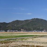 星の瞳 ~ 延岡市・愛宕山を見つめて 咲きました。