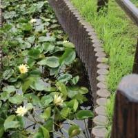 スイレン・・・境川遊水地公園
