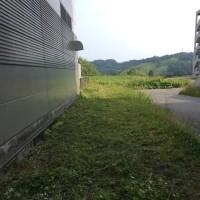 金沢大学、草刈ボランティア中