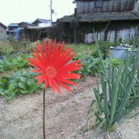 季節かまわず咲く花は…‥・o(^-^)o🌼✴