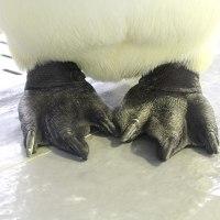 ペンギンの足