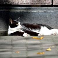 京都・白川の猫