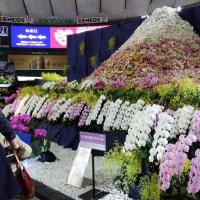 日本洋蘭生産協会東日本支部展示