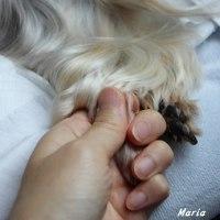 愛するマリア どうぞ安らかに。