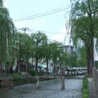 山陰道の街路樹