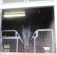 馬・馬づくしー北海道のたび