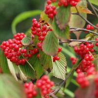 秋という花 赤い実