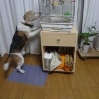相性 犬⇔インコ
