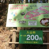 那珂川町富山「とみやま」の岩うちわ