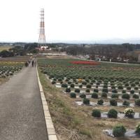 小菊園の案山子たち