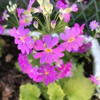 次々と咲き始める Flowers bloom out