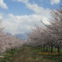 4月中旬 糸魚川へアジ釣行