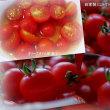 ●ブルベリーとミニトマトの収穫 ブルベリーヨーグルト ミニトマトのマリネ オクラ
