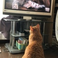 Taiga was watching TV.