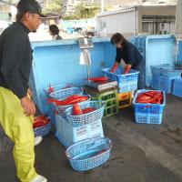 金目鯛漁が始まったよ。