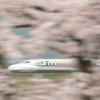 桜と N700系