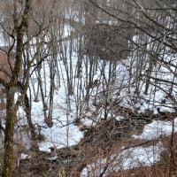 川音を聞き、残雪の曲線をなぞり、森を歩く。