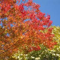 10/27(木)のイキメンニュース~少子化・子育て・教育の情報