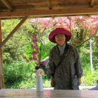 庭の花で生け花&ランチ&抹茶