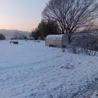 上雪(カミユキ)が降りました!