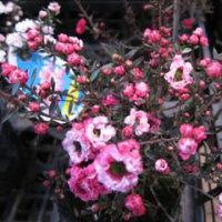 23日の病院の後、JAに寄るとお花が一杯出ていました。