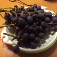 ブドウ・・・収穫したのは良いけれど。