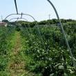 収穫量と儲け