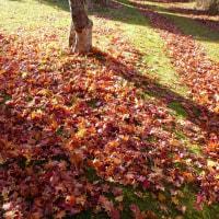 演習林の紅葉