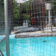 「上野動物園」へ行ってみました
