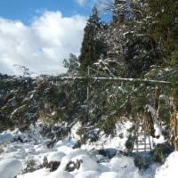 ヘロヘロになりつつ、気侭に木尽くし 雪て進勲
