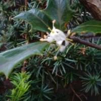 12月3日の花