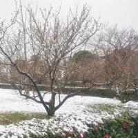 まっしろ雪化粧♪