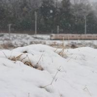 3月26日撮影 雪の飯田線と辰野線