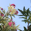 近所で見た花