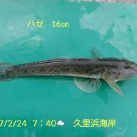 笑転爺の釣行記 2月24日☁ 久里浜・長瀬