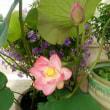 去年頂いた胡蝶蘭が咲きましたぁ~