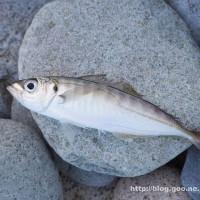 2017 第二回釣行 ~糸魚川