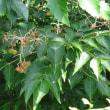 玉川上水の植物