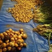 土屋農園産野菜