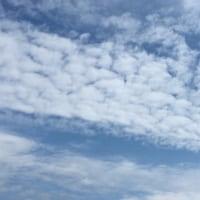 青空 蜻蛉 アスパラの花