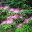 【京都園芸倶楽部Facebook】先週の植物(2017年7月16日~22日)