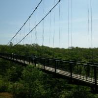 八幡つつじ群落とつつじ吊橋