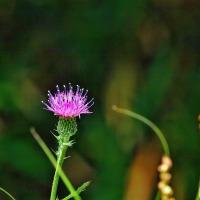 御陵の森の花 一輪