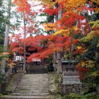 滋賀・紅葉の旅 3