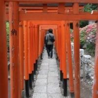写真館を「No.778 根津神社(つつじまつり)」に更新しました!